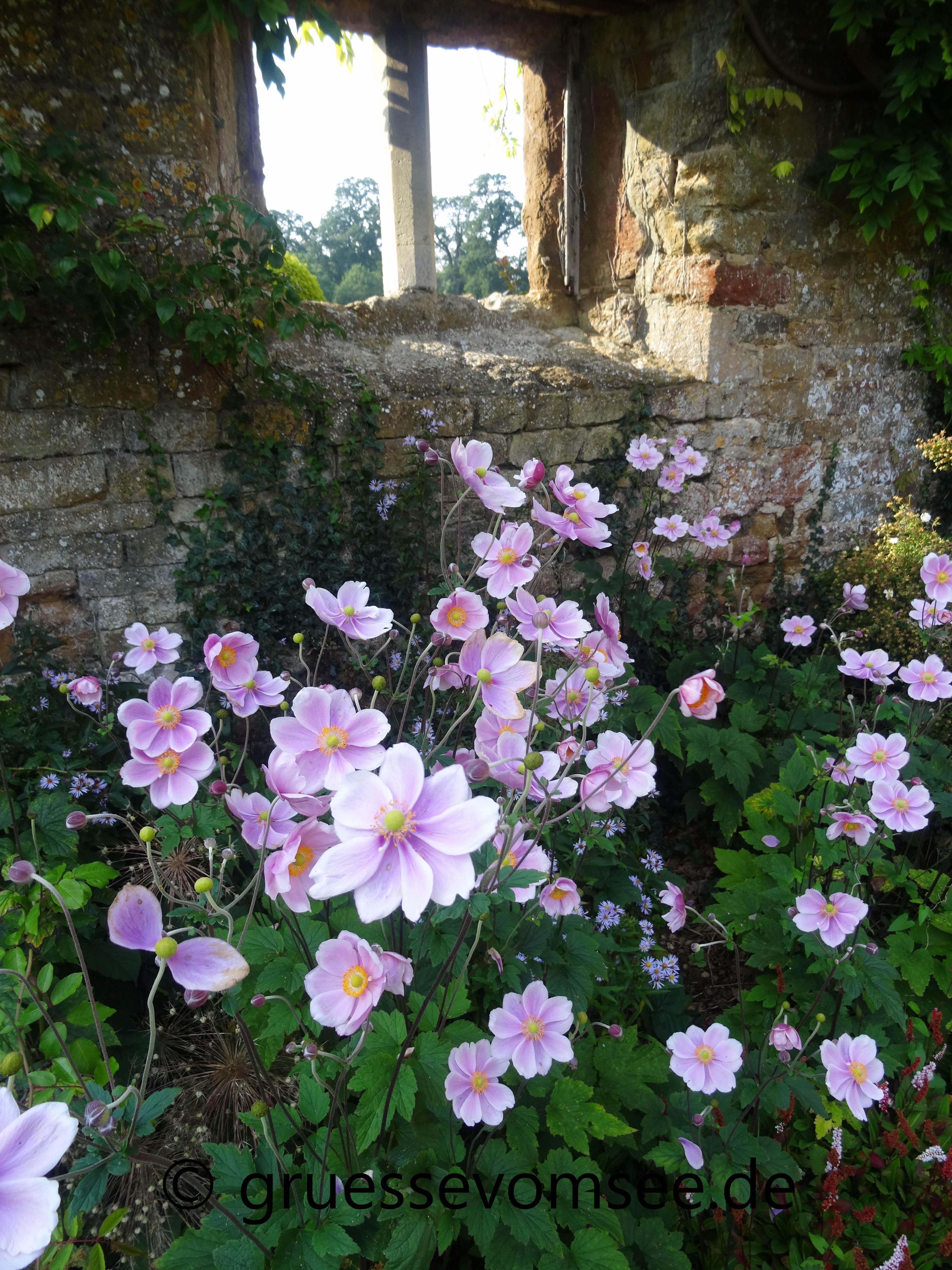 Cotswolds_England_Reise_Growe_Blumen_Broughton_Castle