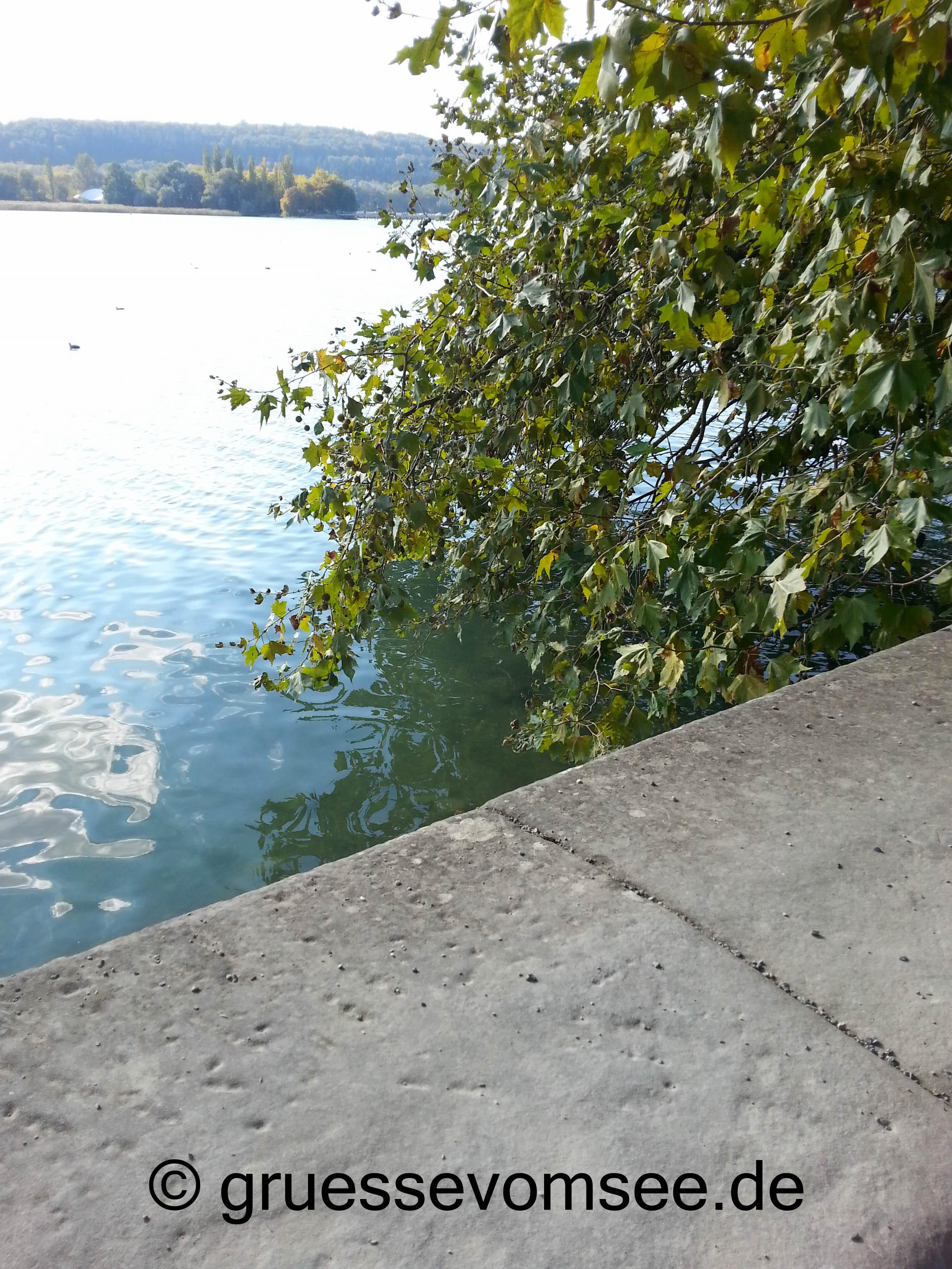 Mainau_See_Herbsttag_gruessevomsee