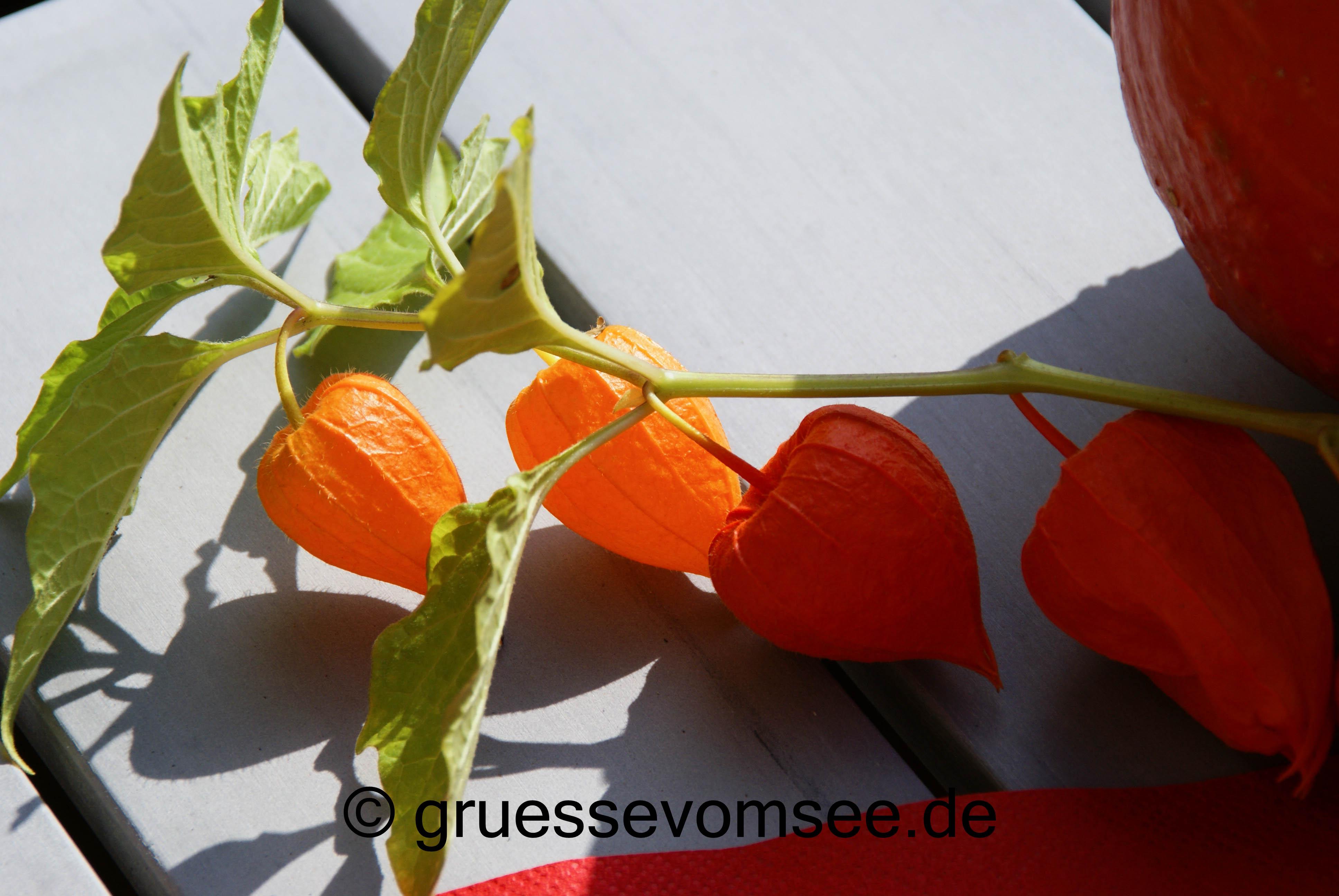 Kuerbis_Kartoffel_Hachfleisch_Auflauf_Gruessevomsee